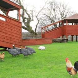 Kennedys Pet Farm