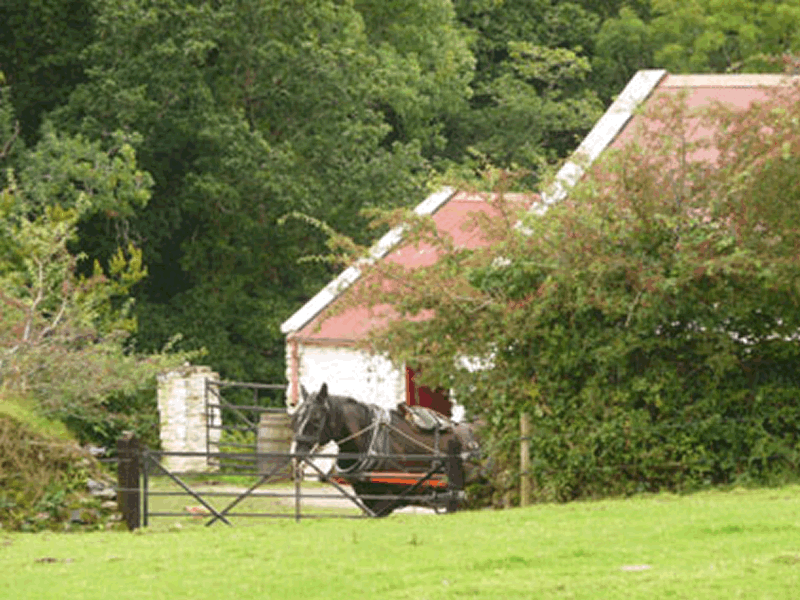 Muckross Traditional Farms & Playground